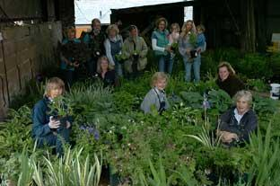 Members and friends of the Heythrop Hunt put the finishing touches to their share of the 25,000 plants being gathered together for sale