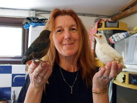 Oak and Furrows founder Serena Stevens compares the albino fledgling with a regular baby blackbird