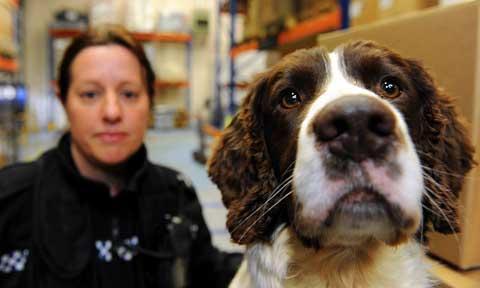 Police sniffer dog Barney, with his handler PC Claire Todd