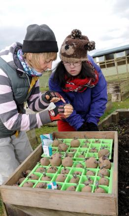 Looking for more volunteer helpers, Emma Costley-White, Founder of the Scrubditch Care Farm, plants potatoes with Charlotte Hainsworth
