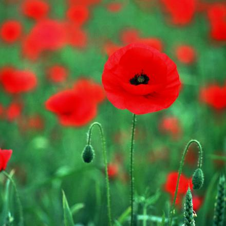 World War One commemoration ideas sought