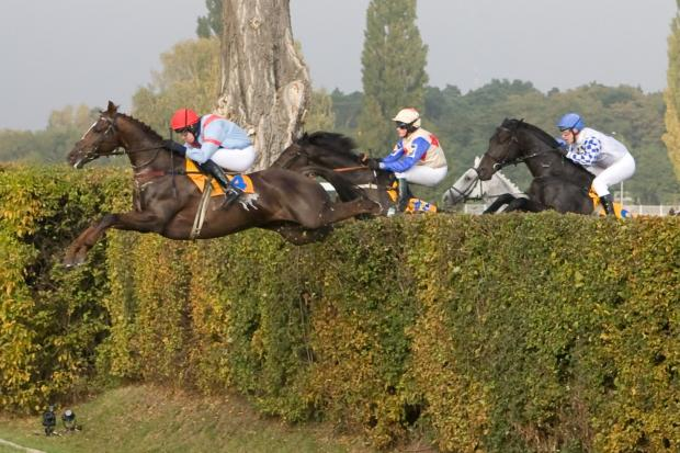 Horses jumping the extraordinary Taxis Ditch in the Grand Pardubice Steeplechase