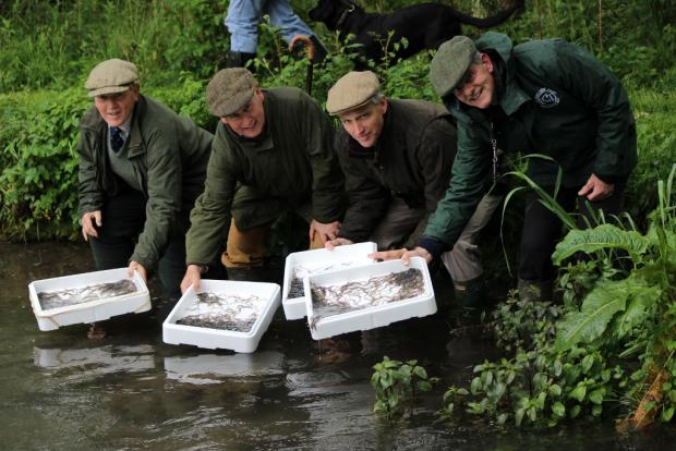 Environment minister Lord de Mauley joined members of the Sustainable Eel Group and Fairford-based charity the Ernest Cook Trust to re-home thousands of the baby eels into the river