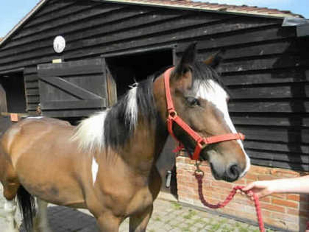 Campaign to help rescued horses launched