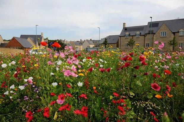 The wildflowers on the Century Way roundabout. Picture by Stuart Tarr of the Beeches Community Group (8829748)