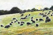 David Durston's Sheep, one of the works in his exhibition