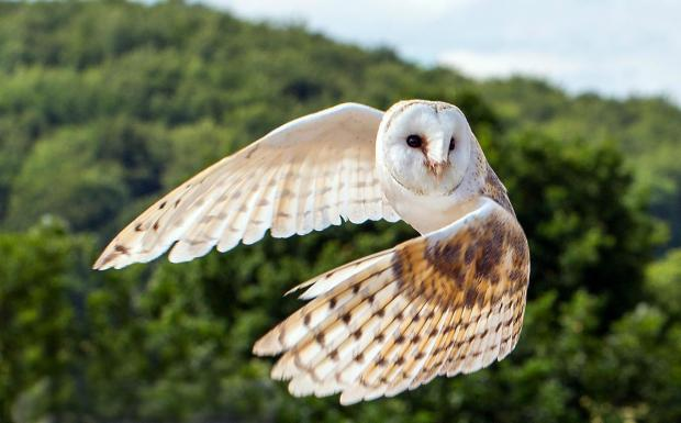 Sherston homes left in the dark after owl flies into power cables