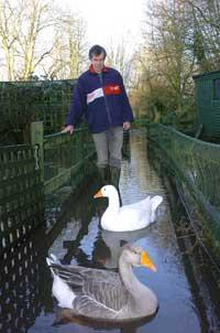 Stuart Forrest with two of the resident geese at the Cotswold Swan and Wild Bird Rescue Centre that faces closure