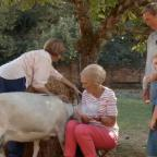 Wilts and Gloucestershire Standard: Fans chuckle at Mary Berry's bid to milk a goat