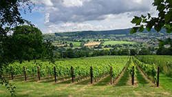 Wilts and Gloucestershire Standard: Stonehouse Vineyard
