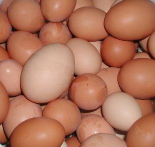 Wilts and Gloucestershire Standard: Shopkeepers ban youngsters from buying eggs