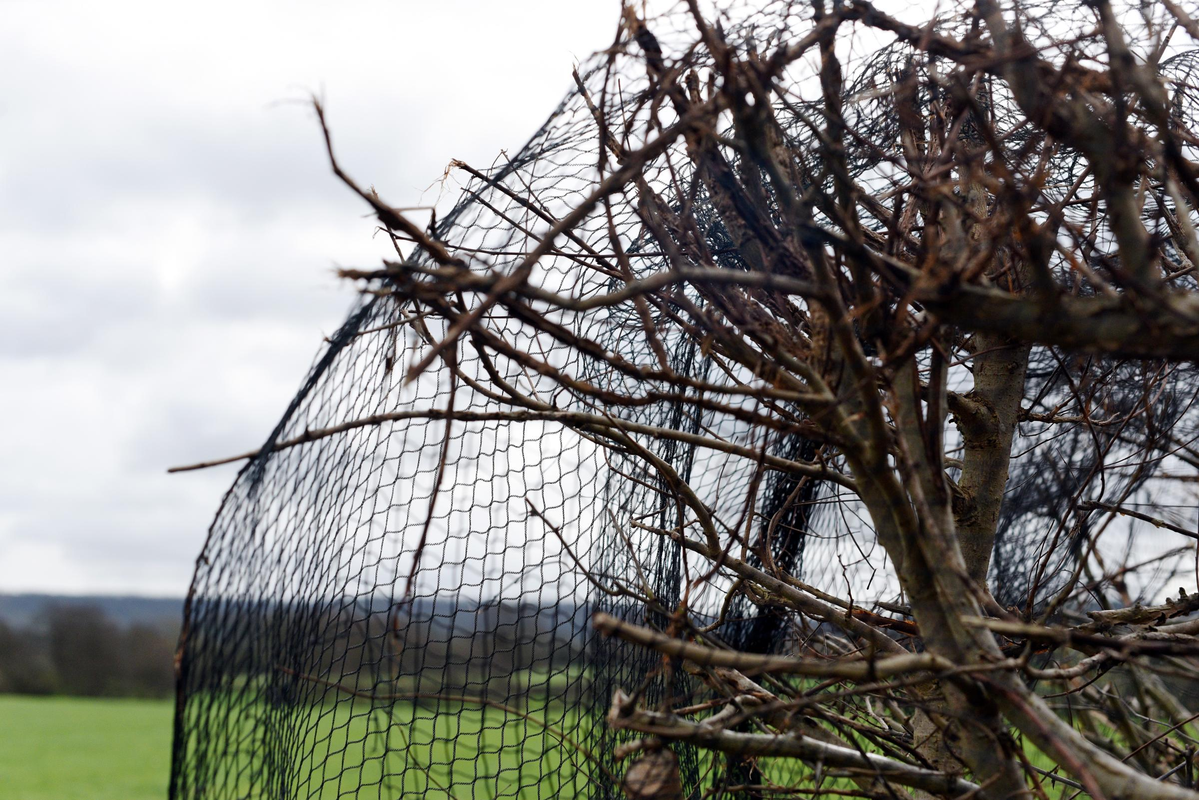 Reports of birds and rabbits caught in anti-nesting netting
