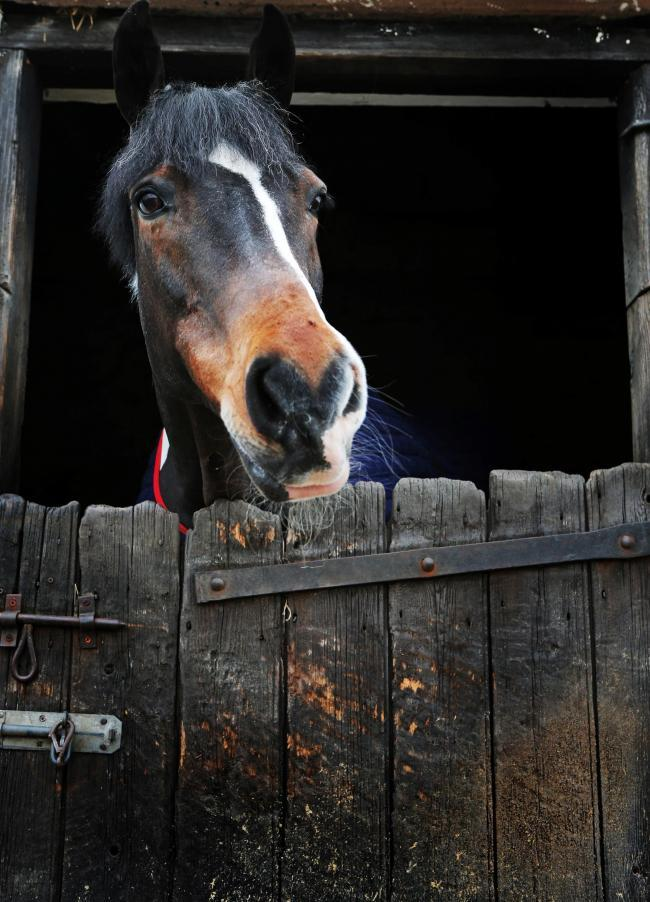 Police received reports of stables being targeted